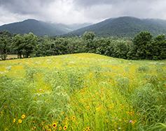 2019 Piedmont Landscape Association Annual Seminar